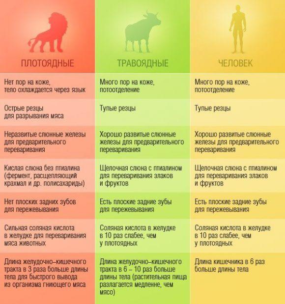 Сравнительная таблица пищеварительной системы «Плотоядные / Травоядные / Человек»