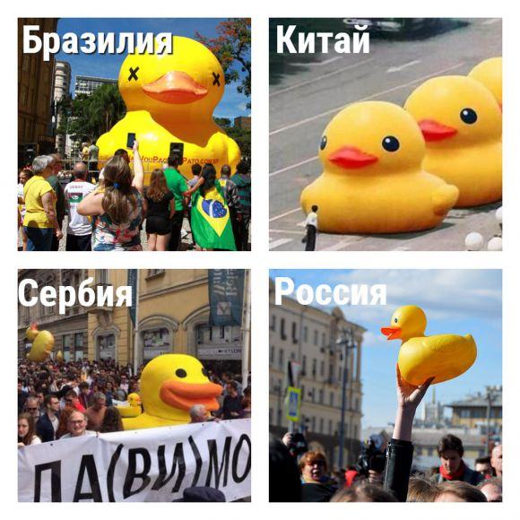 Жёлтая уточка в Бразилии, Китае, Сербии и России