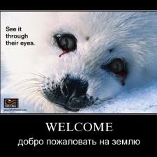 Добро пожаловать на Землю